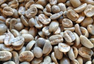 パカマラ 生豆
